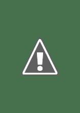 Photo: Parakeet