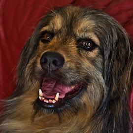 PET by Jose Maria Vidal Sanz - Animals - Dogs Portraits ( nikon d, nikonphoto, color, dog, pet )