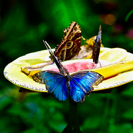 Butterflies by Victoria Eversole - Animals Other ( colors, florida, tourism, key west, butterfly refuge )