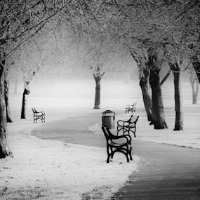 Benches and Frost by Phil Clarkstone - City,  Street & Park  City Parks ( pwcbenches )