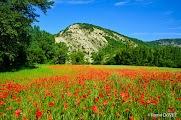 Пейзажи Прованса