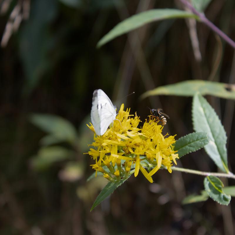 Un fiore per due  di mattia_contena