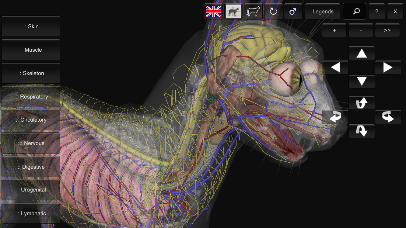 3D Cat Anatomy- screenshot