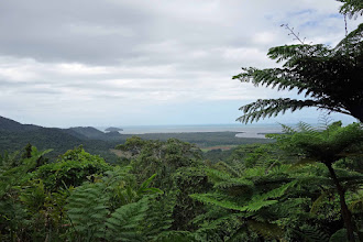 Photo: The Daintree Rain forest meets the coast. Near Cape Tribulation.