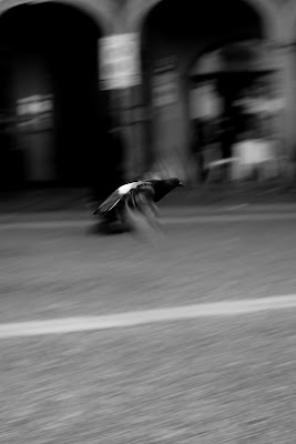 Run away di alessandragennari