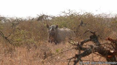 Photo: Mugie park - černy nosorožec Viktorie / Mugie park - Black rhino Victoria