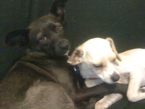 Photo: Malia and Koko