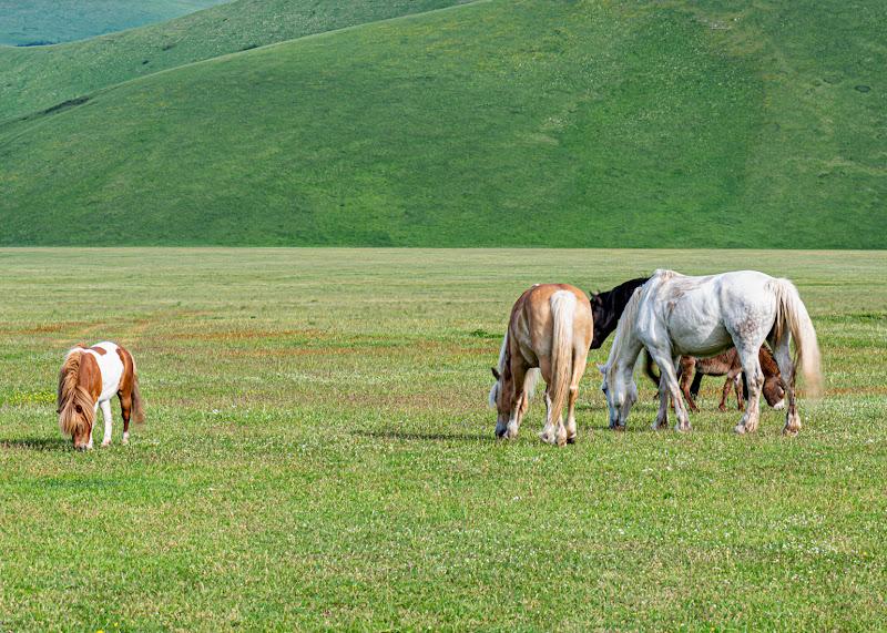 Galoppa galoppa piccolo Pony... di manu_esse74