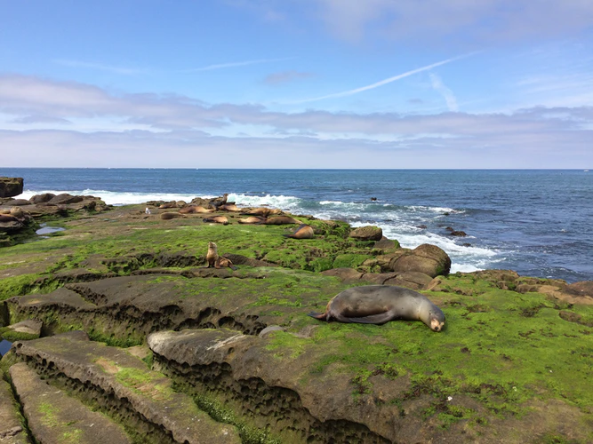things to do in la jolla for couples