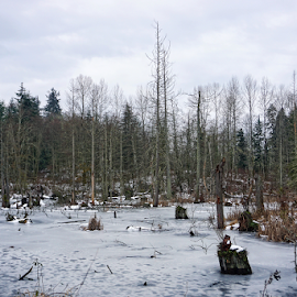In winter  by Todd Reynolds - Landscapes Forests