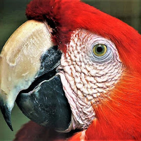 by Dipanjan Ray - Animals Birds