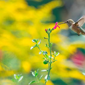 by Anna Trandeva - Animals Birds (  )