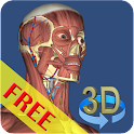 3D Bones and Organs (Anatomy) icon