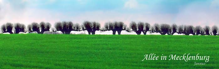 Photo: Alléebäume im Norden