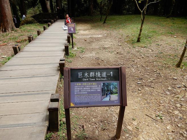 巨木へと続く道