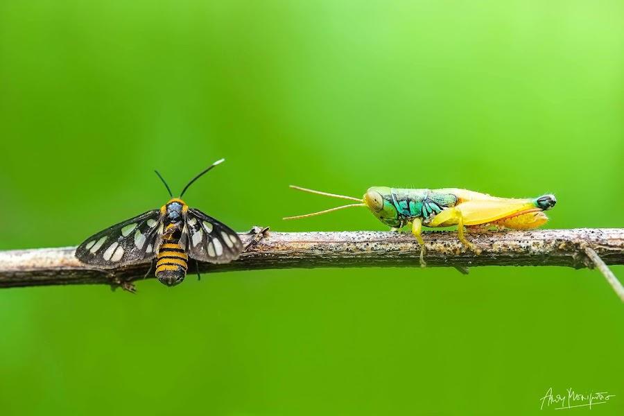 aku sadar kita memang berbeda .. tapi entah kenapa aku ingin mendekatimu,mengenalmu,,, dan memilikimu  #lempar_sandalbelajar stage by Andy Moerijanto - Animals Insects & Spiders