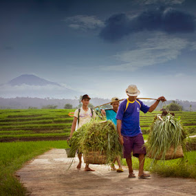 Farmer Activity by Victor Lin - News & Events World Events