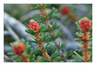 Photo: Eastern Sierras-20120715-337