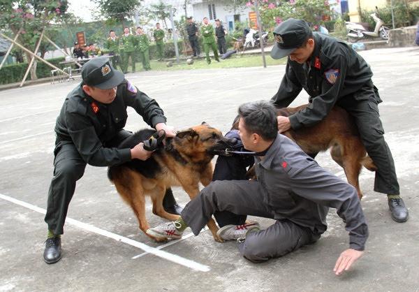 Cán bộ huấn luyện và chó nghiệp vụ biểu diễn tấn công tội phạm
