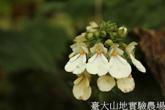 Photo: 拍攝地點: 春陽-蘭園 拍攝植物: 細點根節蘭 拍攝日期:2012_07_18_FY