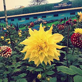... by Shafaly Sharma - Nature Up Close Gardens & Produce ( pwcflowergarden )