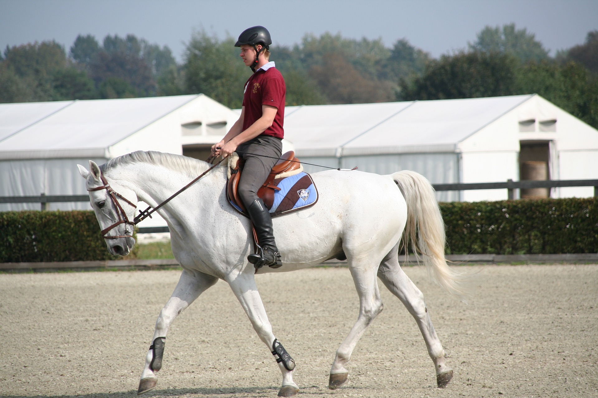 Equestrian saves money by exercising a grey horse for a trainer