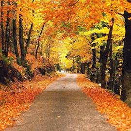Outono na Serra da Estrela. by Luis DuarteSantos - Uncategorized All Uncategorized