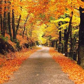 Outono na Serra da Estrela. by Luis DuarteSantos - Uncategorized All Uncategorized (  )