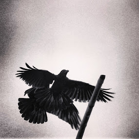 The angle by Shiful Riyadh - Instagram & Mobile Android ( mobilography, bird, crow, abstract, black and white )