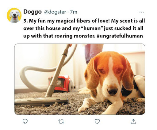 9 Things Dogs Would Tweet if They Could
