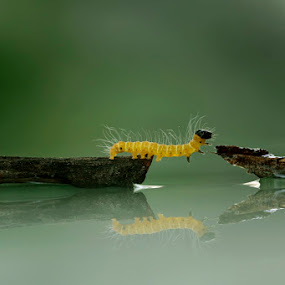 almost by Teguh Santosa - Animals Other