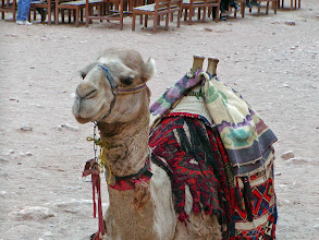 Photo: Laura Bush tried one of these camels on her visit to Petra.
