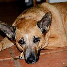 CUDDLZ PORTRAIT by Mel Bishow - Animals - Dogs Portraits ( © mel bishow,  )