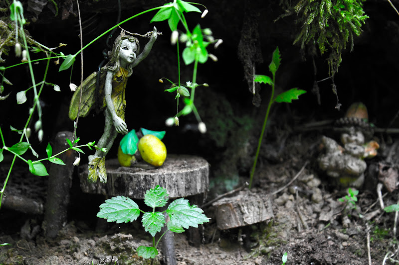 Foresta incantata di Lorenzo Arcelli