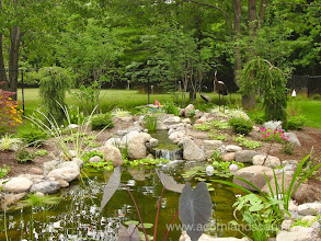 """Photo: Acorn Ponds & Waterfalls, Certified Aquascape Contractor since 2004. Check out our website www.acornponds.com and give us a call 585.442.6373.  Ecosystem Garden Pond, #Waterfalls, Stream, Pond Design and #FishPond Installation by Acorn Ponds & Waterfalls of Rochester, NY.   Here's what this Pond owner had to say about Acorn: """"Tom Warmerdam truly loves what he does & is extremely enthusiastic about ponds and streams. He is very knowledgeable & shares information so others will be successful pond owners. His standards and quality of work are excellent."""" Pam W.  For more info about Pond Installations please click here: www.acornponds.com/ponds.html  Acorn Ponds & Waterfalls of Rochester NY, 585-442-6373, is a Certified Aquascape Contractor, Landscape Designer, Outdoor Lighting Designer, Installer, Builder, Contractor and Design Service Company from Rochester, NY. We have professional Installation and Design Services available for the following: Landscape Design Outdoor Room Design Backyard Ponds and Waterfalls Design & Construction Patios and Walkways: Paver, Stone, Brick Low Voltage Landscape Lighting LED Landscape Lighting Swimming Ponds Ecosystem Ponds LED Outdoor Lighting Retaining Walls Fountains Water Features Pondless Waterfalls Pond Maintenance and Design Aquatic and Under Water LED Lights Bubbling Boulders and Urns Natural Stone Patios and Rock Gardens Garden Ponds Outdoor Kitchens Pizza Ovens Fire Pits Fish or Koi Ponds Waterfall Ponds Low Maintenance Plantings Commercial Landscape Design Residencial Landscape Design Drainage Issues, Solutions Aquascape Rainwater Collection Systems  We serve Pittsford NY, Penfield NY, Brighton NY, Fairport NY, Webster NY, Greece NY, Victor NY, Henrietta NY, Irondequoit NY, Rush NY.  To learn more about Acorn Ponds & Waterfalls Services, please click here: www.acornponds.com/services.html  Click here for a free Magazine all about Ponds and Water Features: http://flip.it/gsrNN  To see more of our #pondinstallations on Fa"""