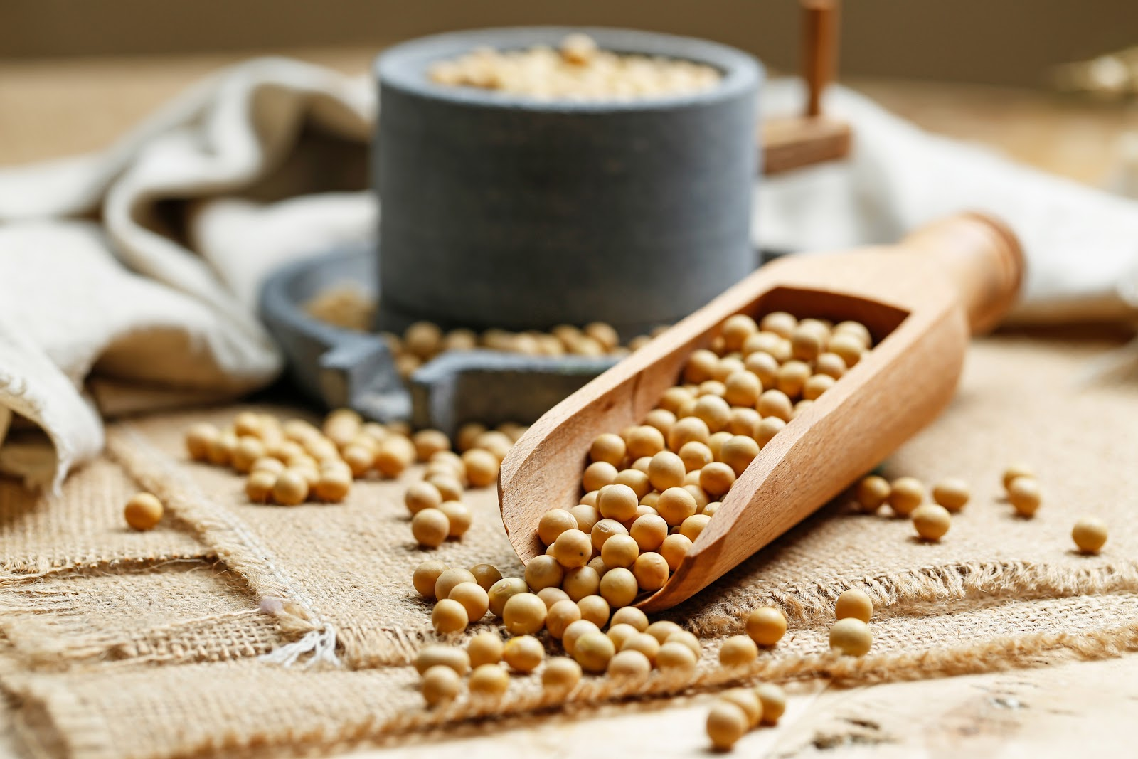 Non-meat Protein Alternatives - Soybeans