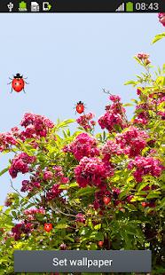 Bunga Mawar Wallpaper Hidup Aplikasi Di Google Play