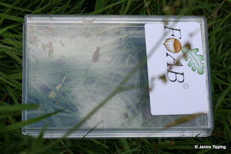 Photo: One of the boxes used to collect and examine bugs