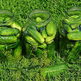 Overrun with Cucumbers? Let Them Ferment.