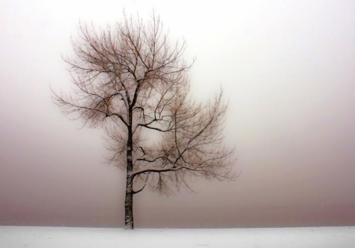 L'albero invernale di Ticino-Joana