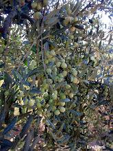 Photo: olives.