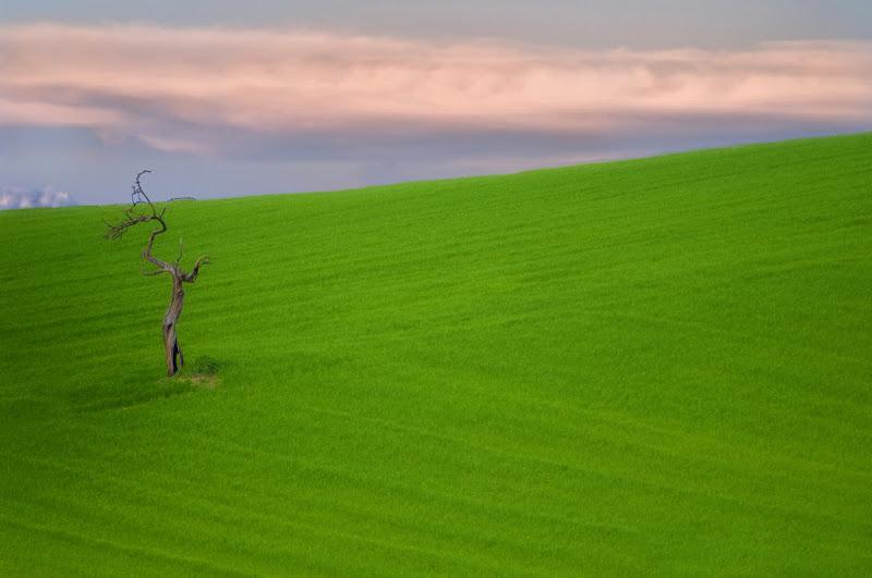 L'albero spaventapasseri di Pasquale Agosti - pasquale.agosti@gmail.com