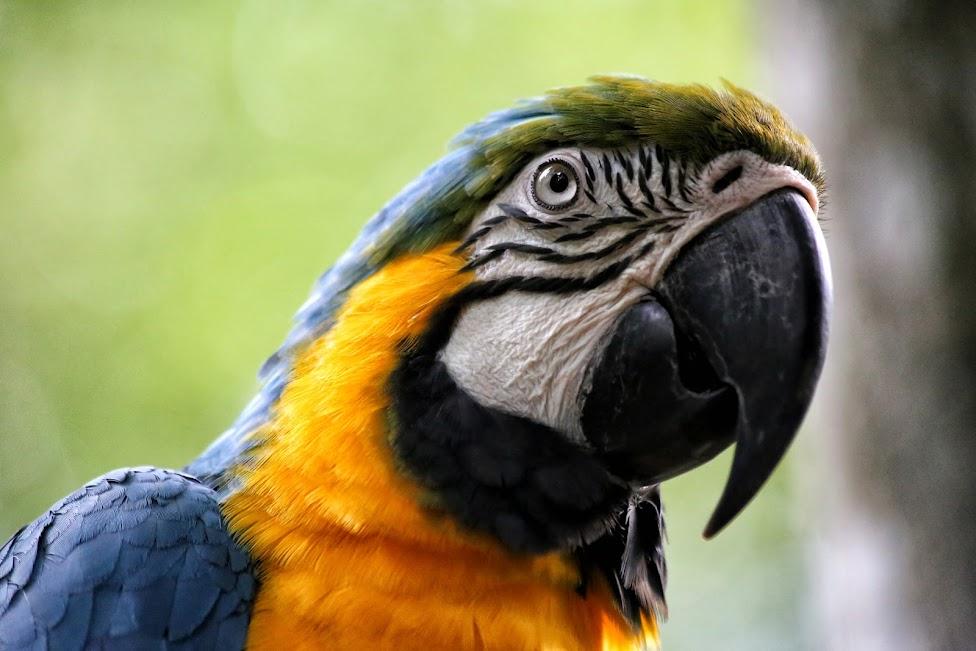 Papuga Ara - Parque das Aves, Wodospady Iguazu