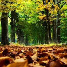 Aautumn 13 by BertJan Niezing - Nature Up Close Leaves & Grasses ( fall leaves on ground, fall leaves )