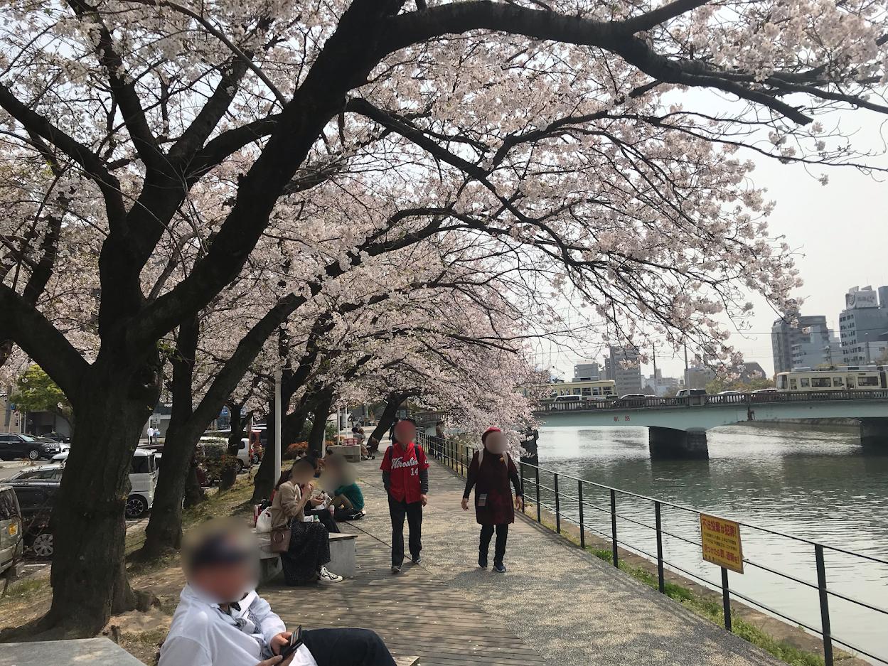 猿猴川の桜