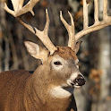 whitetail deer wallpaper free icon