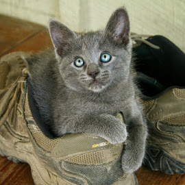 Country Kitten by Margie Troyer - Animals - Cats Kittens (  )