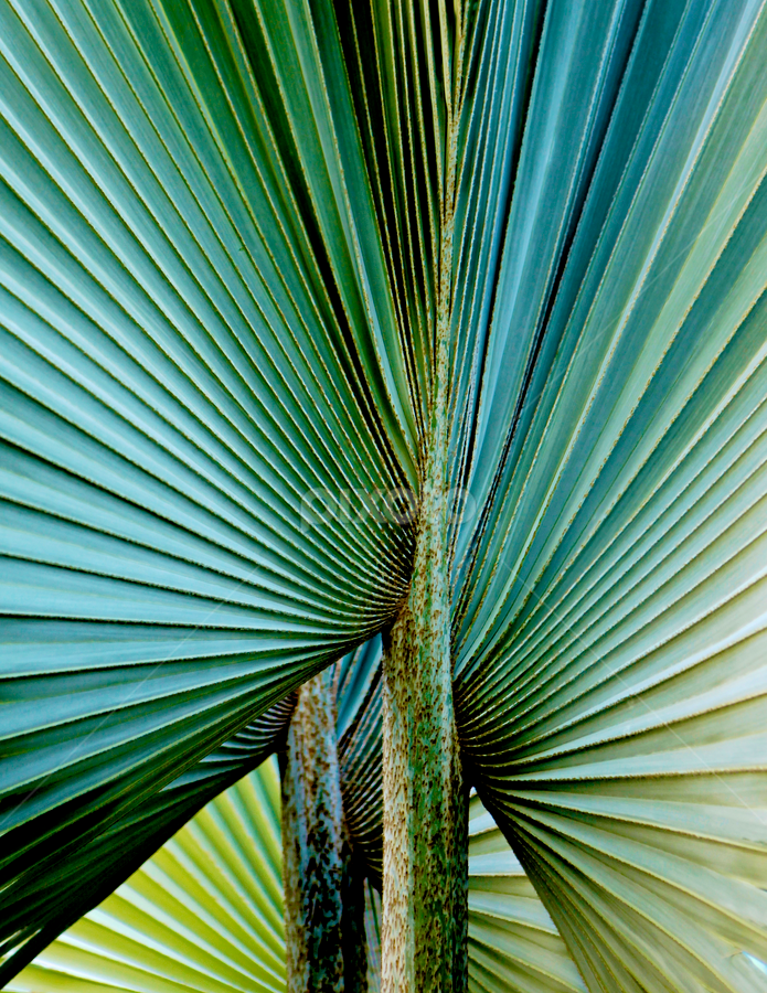 by Jeannette Thalmann-Bendeth - Nature Up Close Leaves & Grasses (  )