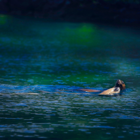 California Sea lions  by Tara McKenzie - Animals Sea Creatures ( @sealions #ocean #wildlife #shorelife #pacificocean #marinelife )