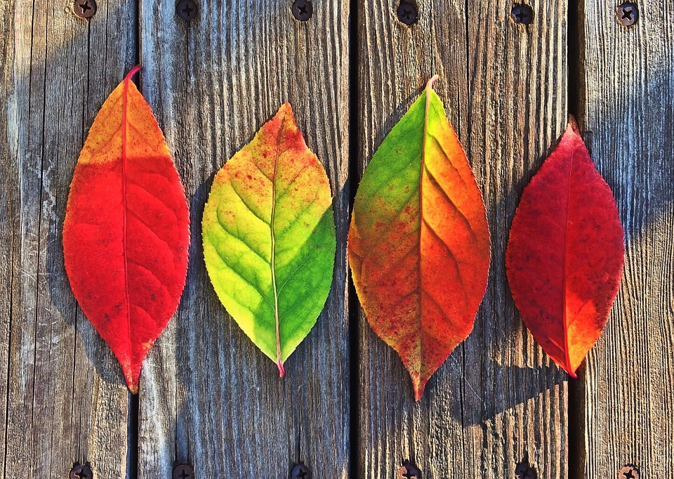 Fall, Leaves - Free images on Pixabay